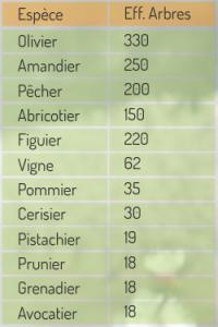 Collection arboricole vivante - Domaine Expérimentale d'AIN TAOUJDATE
