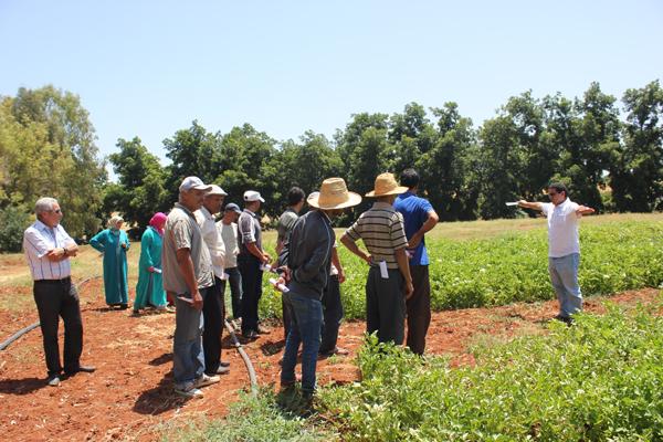 Journée de transfert participatif de technologie sur l'irrigation des culture maraîchères, DE Aïn Taoujdate (INRA Meknès), 13 juil. 2015