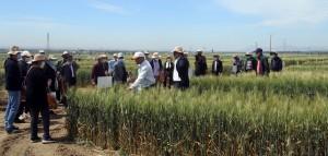 Plateforme « Cartographie des variétés des blés »